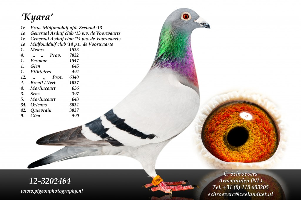 1prize Chateauroux in the interplay of national and 7th 11922 pigeons